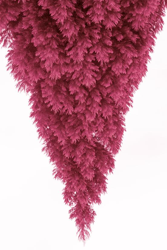 Hazel on 3rd - pink tree